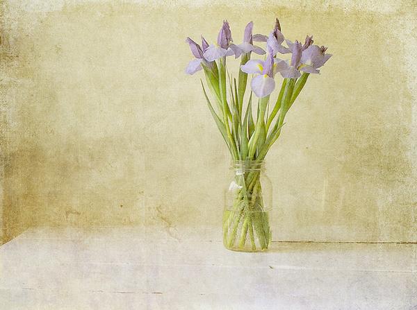 Текстурная фотография Памелы Шмидер - №15