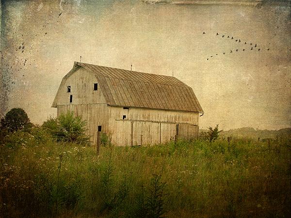 Текстурная фотография Памелы Шмидер - №18