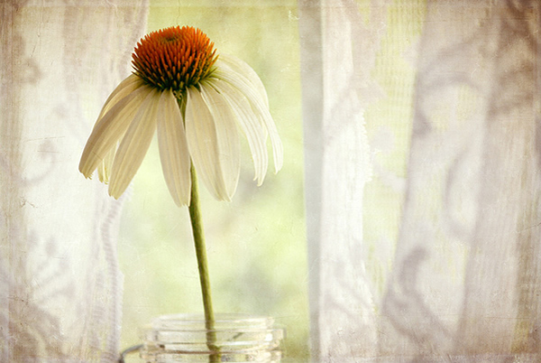 Текстурная фотография Памелы Шмидер - №21