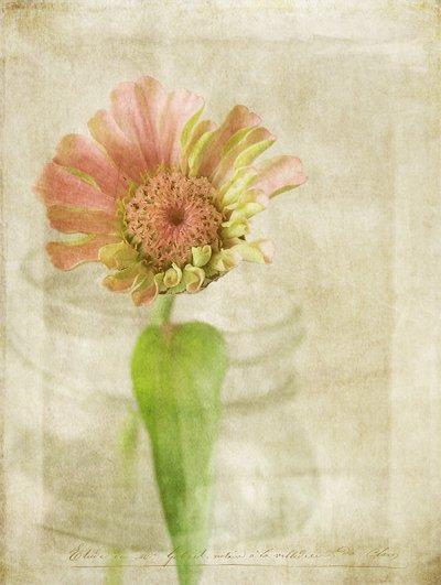 Текстурная фотография Памелы Шмидер - №22