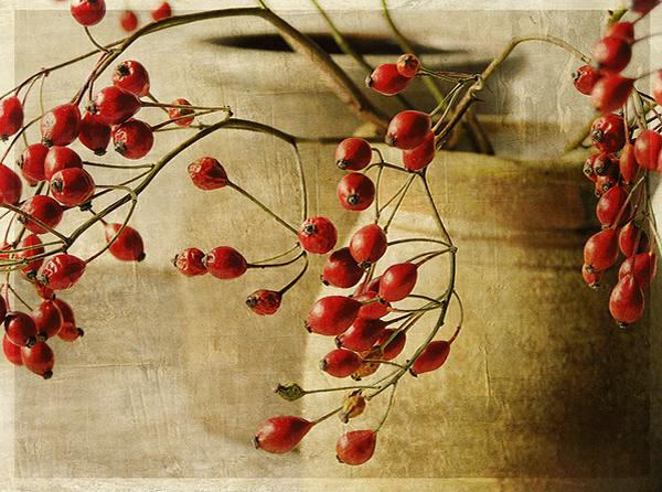 Текстурная фотография Памелы Шмидер - №28