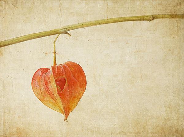 Текстурная фотография Памелы Шмидер - №33