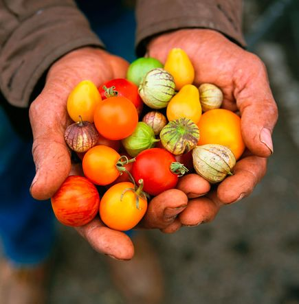 Урожай, штат Калифорния(фото:Catherine Karnow)