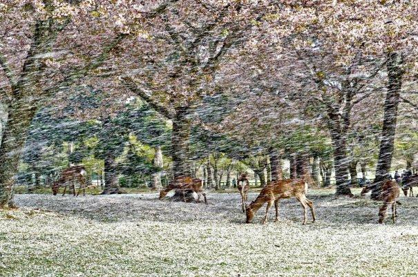 (Hisao Mogi/National Geographic Traveler Photo Contest)
