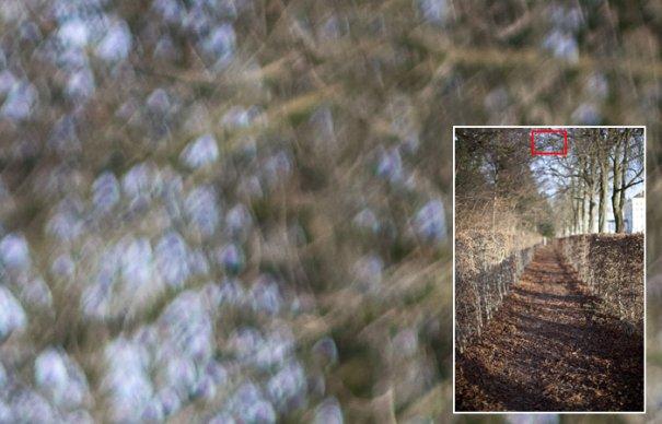 Обзор объектива Canon EF 50mm f/1.2 USM L - №8