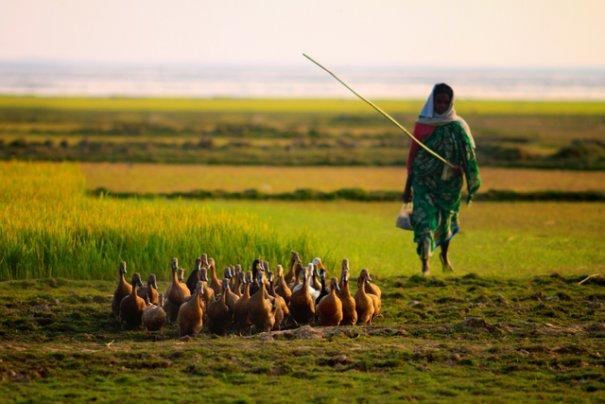Фотограф из Бангладеша Камрул Хасан - №8