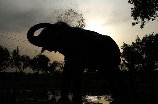 (AP Photo/Rajesh Kumar Singh)