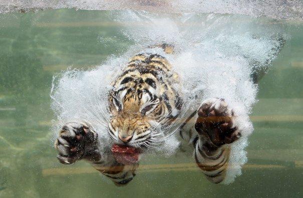 (Justin Sullivan/Getty Images)