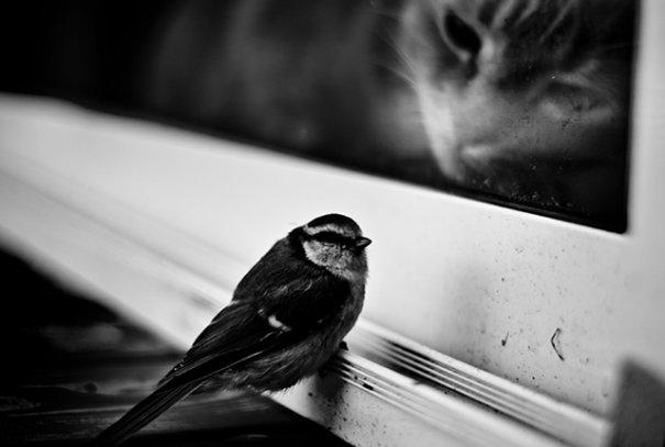 © Johan Lind