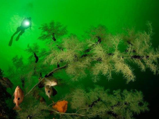 Черные кораллы, Новая Зеландия
