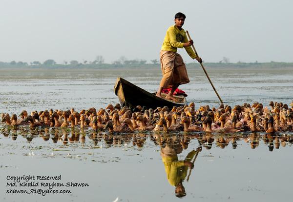 Кхалид Райхад Шавон. Бангладеш и его люди. - №5