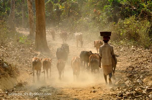 Кхалид Райхад Шавон. Бангладеш и его люди. - №6