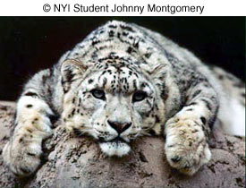 Как сделать отличные фотографии животных в зоопарке - №1