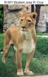 Как сделать отличные фотографии животных в зоопарке - №2