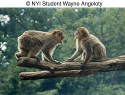 Как сделать отличные фотографии животных в зоопарке - №3