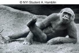 Как сделать отличные фотографии животных в зоопарке - №4