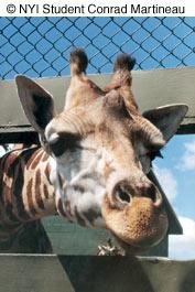 Как сделать отличные фотографии животных в зоопарке - №5