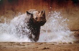 Как сделать отличные фотографии животных в зоопарке - №6