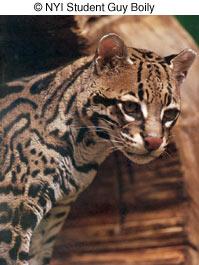 Как сделать отличные фотографии животных в зоопарке - №7