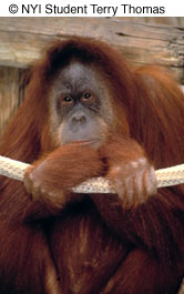 Как сделать отличные фотографии животных в зоопарке - №8