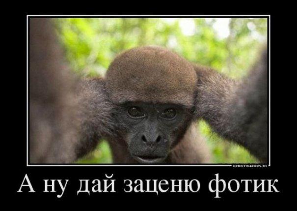Фото юмор (демотиваторы) - №20