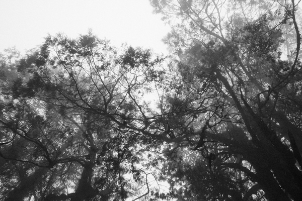 Мир, погрузившийся во мглу. Rohit Krishnan Sabu - №2