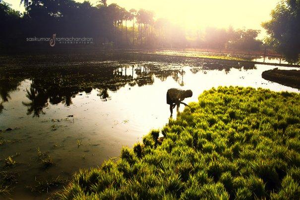 Талантливый индийский фотограф Сасикумар Рамачандран - №4
