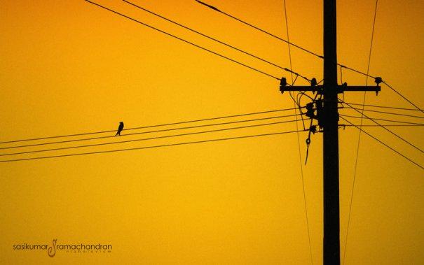 Талантливый индийский фотограф Сасикумар Рамачандран - №9