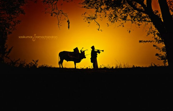 Талантливый индийский фотограф Сасикумар Рамачандран - №15