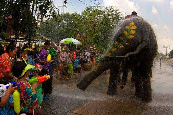 """слон танцует под проливным """"дождем"""""""