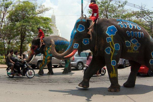из-за слонов