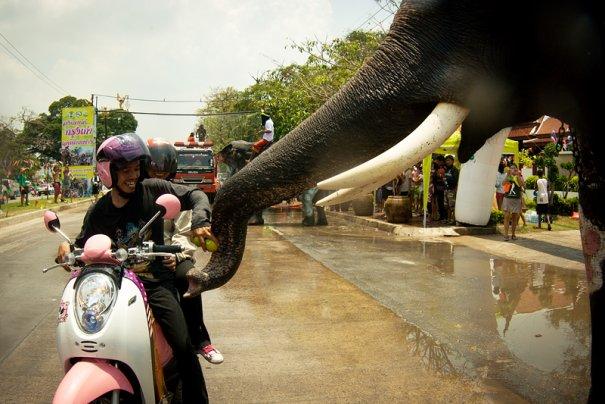 разукрашеных слоников принято подкармливать вкусным. иначе не проедешь:)
