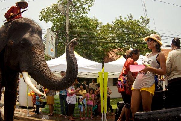 напоил слона - получи бесплатный душ!