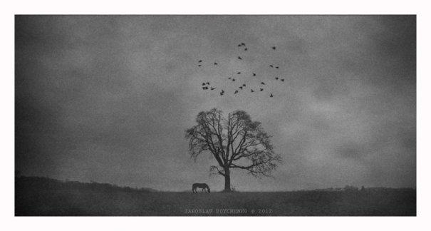 Жанровые фото. ( photographer Yaroslav Boychenko) - №8