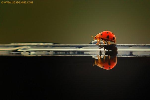 Великолепные фотографии насекомых Дени Алиспутра - №1