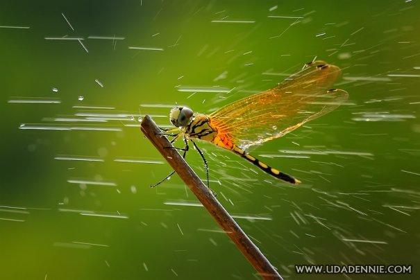 Великолепные фотографии насекомых Дени Алиспутра - №2