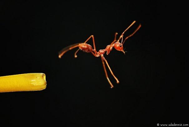 Великолепные фотографии насекомых Дени Алиспутра - №3