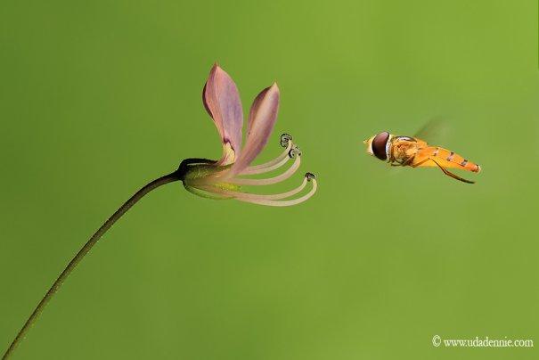 Великолепные фотографии насекомых Дени Алиспутра - №4
