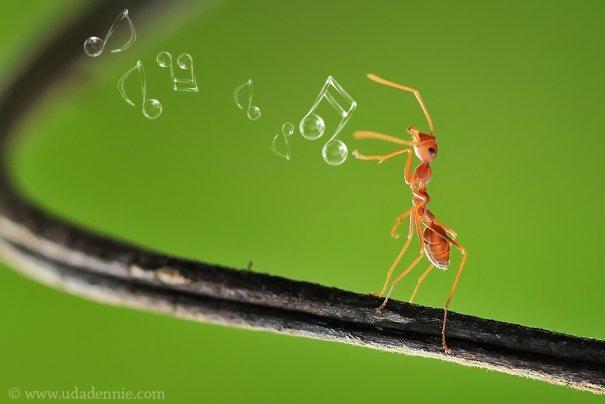 Великолепные фотографии насекомых Дени Алиспутра - №5