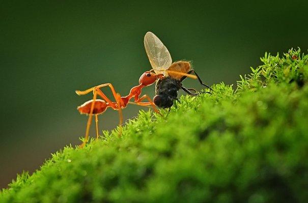 Великолепные фотографии насекомых Дени Алиспутра - №8