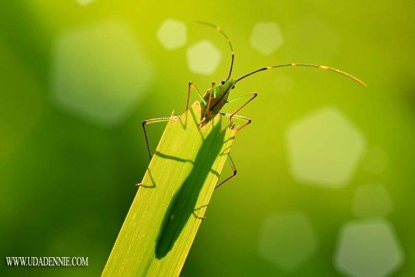 Великолепные фотографии насекомых Дени Алиспутра - №9