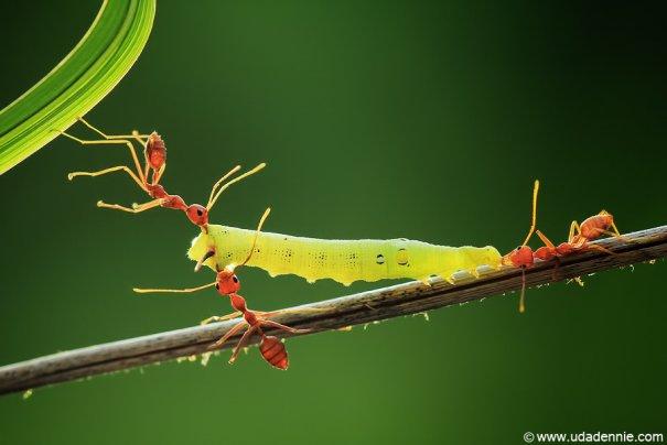 Великолепные фотографии насекомых Дени Алиспутра - №11