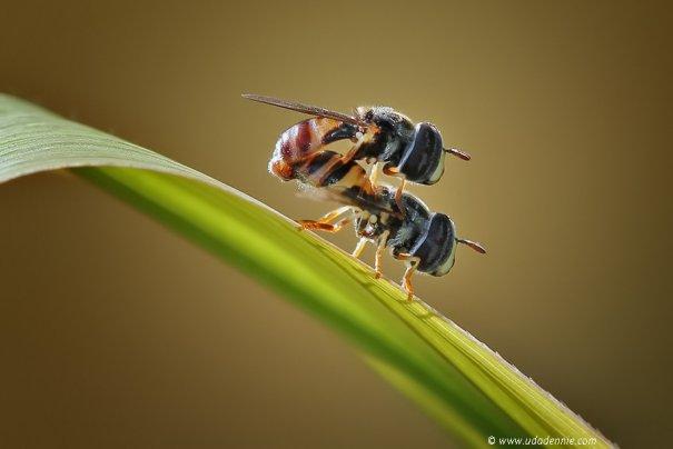 Великолепные фотографии насекомых Дени Алиспутра - №13