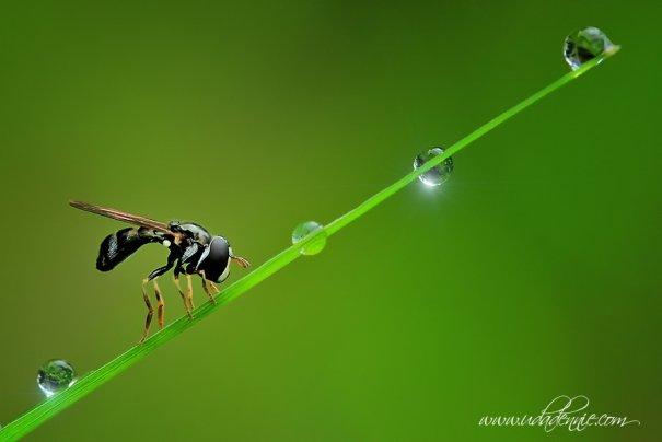 Великолепные фотографии насекомых Дени Алиспутра - №15