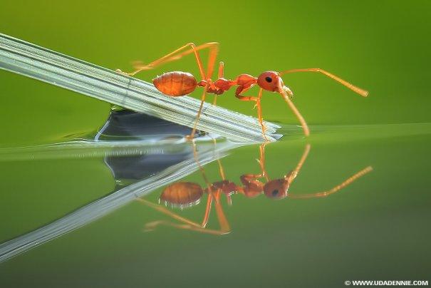 Великолепные фотографии насекомых Дени Алиспутра - №16