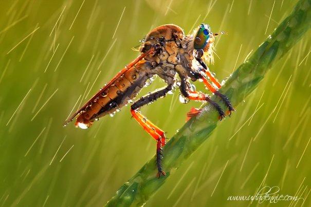 Великолепные фотографии насекомых Дени Алиспутра - №17