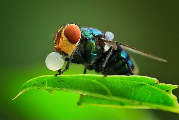 Великолепные фотографии насекомых Дени Алиспутра - №19