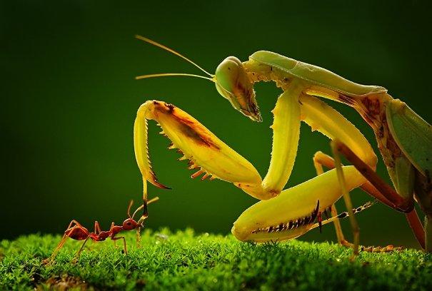 Великолепные фотографии насекомых Дени Алиспутра - №20