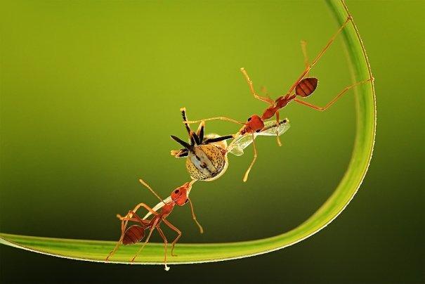 Великолепные фотографии насекомых Дени Алиспутра - №21