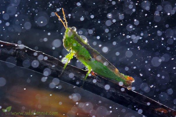 Великолепные фотографии насекомых Дени Алиспутра - №22